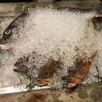 和食居酒屋 旬門 - 魚