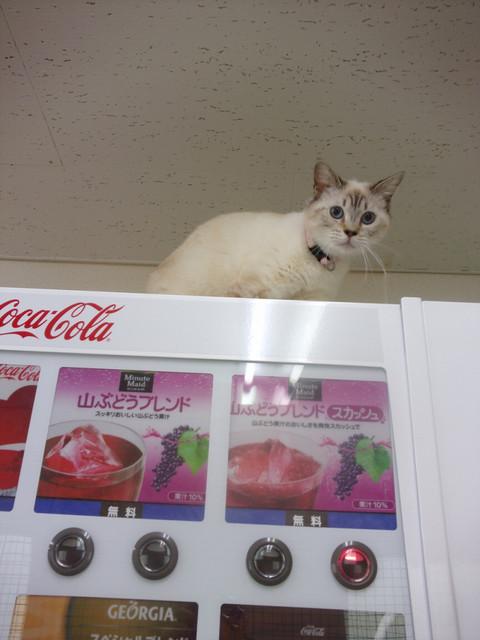 保護猫シェルター「おうちにおいで。」 - どうぞ飲んでってニャ