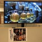 大重食堂 - サイフォンだしの映像(松坂屋上野店「九州物産展」)