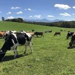 93012806 - 上へと食べ進める牛たち
