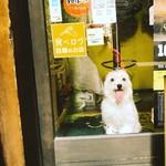 Cham - ワンコご来店OKです!要予約お願いします!