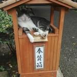 93158133 - 唐沢山城跡はゆる猫がいっぱい生息。