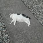 93158141 - 唐沢山城跡で昼寝中のゆる猫。