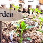 cafe HOM+ - 自家製の野菜が取れるプチ菜園もあるんですよ~!
