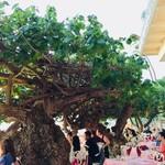 Hau Tree Lanai Restaurant - 店内