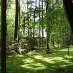 カフェ ラフィーネ - カフェテラスから見える景色・お庭