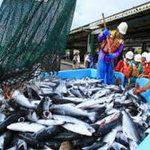 割烹 しが - 小名浜漁港 震災後 初水揚げ   カツオ・サンマを食べて風評被害を乗り越えよう!