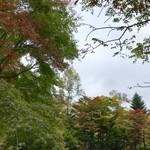和泉屋傳兵衛 - 星野温座東屋の近くの紅葉