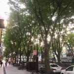 甘座洋菓子店 - 桜並木