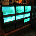 PHAKCHI JO'S - 店内でパクチーの水耕栽培中!