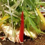 寄せ豆腐と水菜のハリハリサラダ