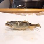 てんぷら阿部 - 稚鮎サイズだけど子持ち。「琵琶湖の鮎は大きくならない」んだそうです。