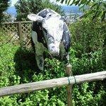 9442044 - 牛のオブジェ