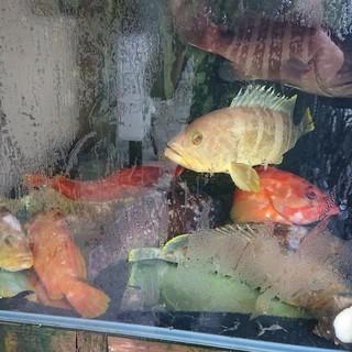 生簀2台完備!活きた海老、貝、蟹をお見せし捌いてご提供します