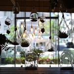 エイトデイズカフェ - 店舗のアイコン植栽