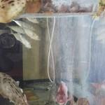 玄海鮨 - アジ  カワハギ  タイ