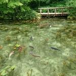 94809979 - モネの池