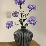 野の花 - 自宅  1階で一輪挿しを購入。早速飾りました。