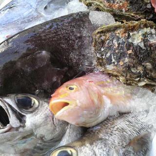 毎日直送!三重県伊勢志摩の旨い鮮魚