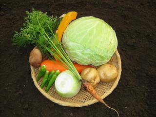 農園レストラン みやもとファーム - 野菜は季節によりますが畑で採れたものをご提供しております