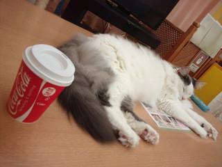 猫カフェアミパ 名取店 - 佐助「お茶飲んで僕のようにくつろぐといいニャ」