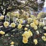はまの屋パーラー - 第二花壇で1番よく咲いていたバラ