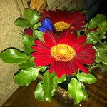 ブロンコ - テーブルに飾られてたお花。可愛いけど水漏れしてたよ。