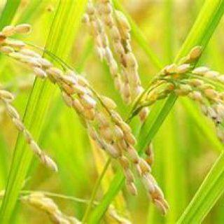 『旬』のお米と『はるゆたか小麦』を使用した自家製パン◎