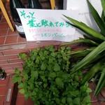 ラ・ベファーナ - 店先にレモンバ-ムが植えられてます