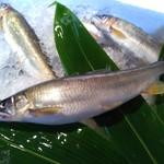 和食処 けんけん - 料理写真:長良川より直送子持ち鮎