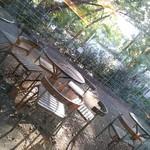 イタリアン・トマトカフェジュニア - テラス席。緑豊かな駒場キャンパス。