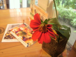 屋久島ヴィータキッチン - 各テーブルには鮮やかなお花が彩る。センスを感じる。