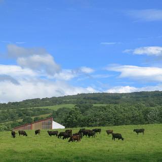 一頭買いのブランド和牛『黒毛和牛パイン牛』