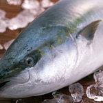 活魚水産 - はまち