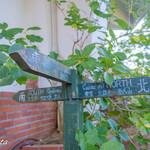 樹ガーデン -