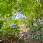 樹ガーデン - 階段を上りきった先