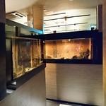 海鮮居酒屋 西河 - 海鮮個室居酒屋 西河 福島店