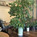 tamon - 緑の多い店内