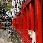 96416788 - 可愛い猫さま♡                       この辺りには猫さまがたくさんいます♡
