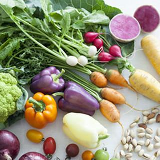 社内菜園や契約農家より届く新鮮野菜