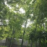 フリット - テラスの脇の竹の植え込み