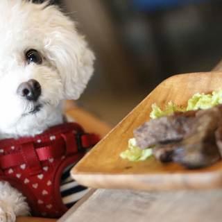 「家族」である愛犬と食事ができるレストラン