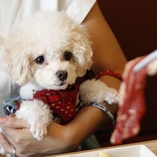 「家族」である愛犬と食事ができる焼肉店