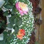 サンセット ドリーム - 店先に咲くバラ5