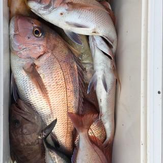 スタッフ皆が釣りが好きで船で魚を調達しに玄界灘に繰り出します
