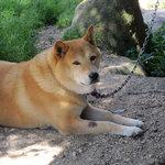 9677671 - お店の番犬くん