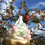アップルガーデンカフェ - 料理写真:おいりソフトクリーム