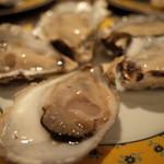 96960135 - 5種類の生牡蠣