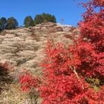 97143053 - 四季桜の里は桜と紅葉の競演でした