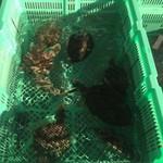 大村湾漁業協同組合 - 料理写真:カワハギ生簀